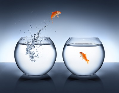 goldfish jumping out of the water - love concept